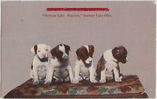 Ohio Postcard 1917 BUCKEYE LAKE Dogs Puppies Beauties Newark Licking County