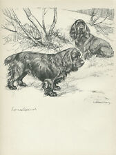 SUSSEX SPANIEL DOGS LOVELY OLD 1938 DOG ART PRINT by VERNON STOKES