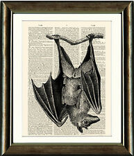 Antique Book page Art Print - Beautiful Bat Image Dictionary Page print