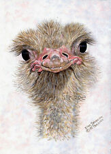 Aceo card, Giclee print, ostrich, bird art, bird Aceo, Aceo cards, ostrich decor
