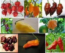 Bhut Jolokia PepperSeed Collection-Red,Orange,Yellow,Purple,Olive,White & 9 More