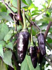 KRISHNA JOLOKIA pure seeds