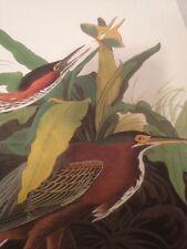Green Heron Audubon Bookplate Art Print Picture