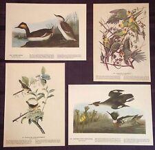 1942 Vintage AUDUBON LOT of 4 GREEN and GOLD BIRDS INSTANT DECOR Art Lithographs