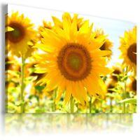 SUNFLOWERS YELLOW SUMMER FLOWER FIELD Canvas Wall Art Picture  FL12 X MATAGA .