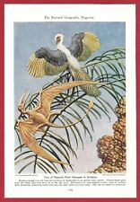 1942 Magazine Print by Charles R Knight ~ Dinosaur Archaeopteryx & Pterodactyl