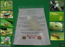 Strong Thrips Insecticide for Vegetables and Plants -  10ml ( for 25L Water )