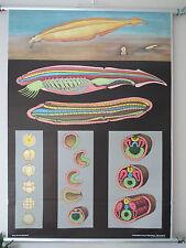 Vintage Jung Koch desplegable Zoológico Escolar Tabla De Tiza de lancelet (3)