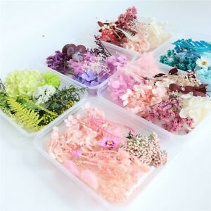 Real Pressed Dried Flower Candle Making Craft DIY for Resin Jewelry Making Decor