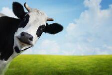 A1 | Funny Cow Poster Art Print 60 x 90cm 180gsm Cows Farm Animal Fun Gift #8273