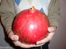 50 Fresh Giant Sweet Pomegranate Seeds From Rare  Israeli Rimon 1Kg/2.2 Lb רימון