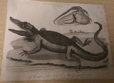 Lacerta: The Crocodile of the Nile, Plate II: Encyclopaedia Londinensis V.12