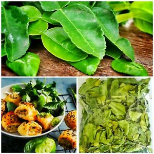 Dried Lime Leaves Organic Natural Food Soup,Cooking Recipe And Steam kaffir 2 oZ