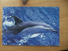 Bottlenose Dolphin postcard by Animal Emergency Relief