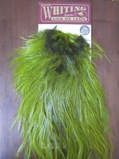 Fly Tying-Whiting Cdl Bronze Rooster Saddle Badger/Fl. Yellow Chartreuse #B