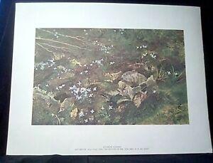 "Andrew Wyeth ""Quaker Ladies"" Print 17""x13"" From 'Four Seasons' Portfolio ca 1960"