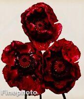 1980 Vintage IRVING PENN Botanical Flower Arab POPPY Photo Engraving Art 12X16