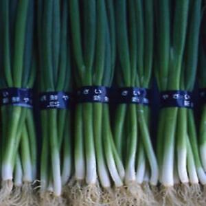 Onion - F1 Darcy - 100 Seeds