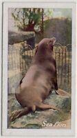 Sea Lion Pacific Ocean Eared Seal 1930 Trade Ad Card