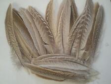 10 plumes longue de 15 cm faisan
