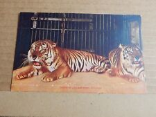 Postcard  Tigers At Lincoln Park Chicago Early Colour card  Unposted