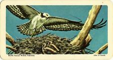 RED ROSE TEA CARD, SERIES: BIRDS OF NORTH AMERICA, OSPREY