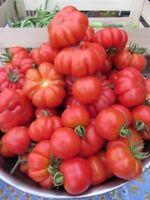 Heirloom Italian Tomato Seed Assortment- 4 Varieties-     500+ Seeds