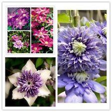 FRESH SEEDS! 30 pcs CLEMATIS Flower Mix Plant Seeds Climbing Bonsai Perennial
