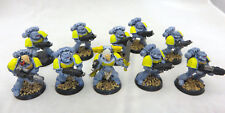 Warhammer 40k Space Marine Wolves Wolf 10 man squad basic paint