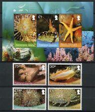 FALKLAND 2013 Meerestiere Seestern Shallow Marine Surveys Satz + Block ** MNH