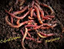 More details for 500g wormery compost worms, fishing worms, from oxford worms