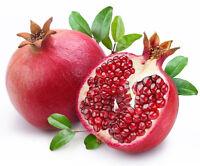 Pomegranate Seed 50 Seeds Punica Granatum Megranate Organic S008
