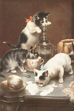 Cute Kitten Cats pre-1 00004000 918 Drawing by Carl Reichert 8-Large New Note Cards