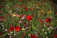 Fairy Garden WILD FLOWER BUTTERFLY & BEE MEADOW MIX 50/50 - 2g