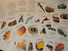ELF ANTAR vintage JEU de CARTES 7 FAMILLES des POISSONS MARINS sea fish CARDS