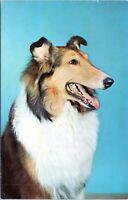 1963 Collie Dog 857 Lassie Vtg Postcard GV