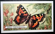 Small Tortoiseshell     Unmounted Vintage 1930's Butterfly Card