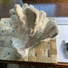 More details for dry coral from 20th century collection substantial 1315g mf3787
