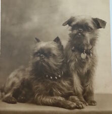 c1920 Brussels Griffon Bruxellois Antiq. Dog Pc A. Noyer Rppc