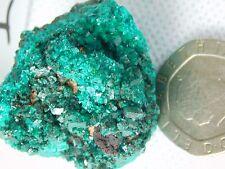 1) Dioptase Specimen Green Mineral Crystal Rock Congo Africa - Rare Top Grade