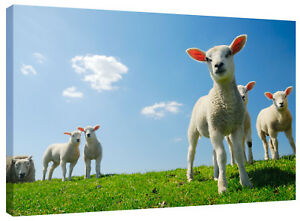 Cute Lambs Farm Animals Canvas Wall Art Picture Print also in Black and White