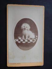 CABINET CARD CDV CHIEN DOG HOND  XIXeme S.  PHOT. BROSSIER CHARLOT  CHATEAUDUN