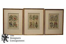 "3 Framed Antique Hand Colored Engravings by J. B. Morandi Fruit & Flowers 25"""