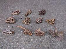11 DINOSAUR SKULLS - Prehistoric Toob of small replica models toys New