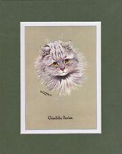 MOUNTED LOUIS WAIN CAT PRINT  -  PRIZEWINNERS  -  CHINCHILLA  PERSIAN