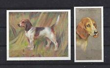 1915 - 1940 UK Reissue Reproduction Dog Art Cigarette Card Set x 2 BEAGLE HOUND
