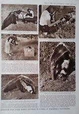 Etching Animals Black Art Prints