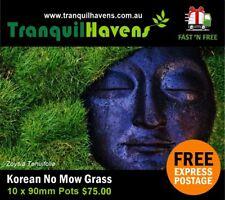 Zoysia Tenuifolia (No Mow Grass) Free Post 10 x 90mm Pots Fluffy Petting Grass