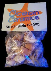 Ocean Ceramics Hermit crab shells (  25 per pack )