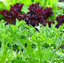 BABY FOGLIA famiglia MIX-ROCKET-Dolcetta-INDIVIA - 2 grammi - 1500 semi